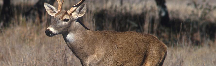 Deer Insert